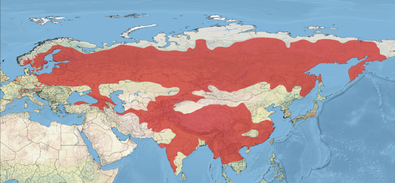 File:Common Rosefinch Distribution.png