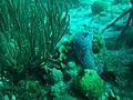 Coral (5453619537).jpg