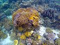 Corals of Gam, Raja Ampat.jpg