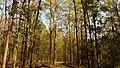 Corbett National Park, India 2.jpg