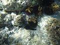 Costa Cabo de Gata 63.JPG
