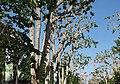 Cours Mirabeau 米哈波大街 - panoramio.jpg