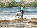 Course de chevaux en Martinique.jpg