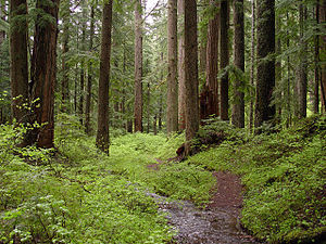 Creek and old-growth forest on Larch Mountain ...