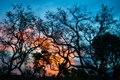 Crepúsculo no Jalapão.tif