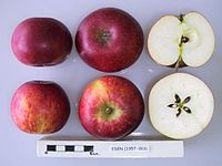 Cross section of Eden, National Fruit Collection (acc. 1957-003).jpg