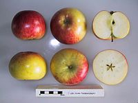 Cross section of Sir John Thornycroft, National Fruit Collection (acc. 1921-020).jpg