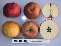Cross section of Telstar, National Fruit Collection (acc. 1961-068).jpg