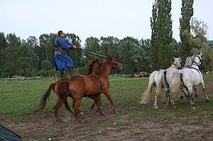 Csikós Post - Hungarian Post riding performance