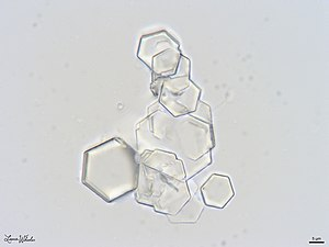 Cystine Crystals in Canine Urine Sediment.jpg
