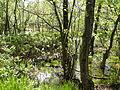 Dänikhorster Moor Vegetation.JPG