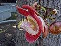 DSC04188 - Flickr - SantaRosa OLD SKOOL.jpg