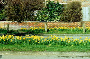 Kingston Vale - Image: Daffodils, Kingston Vale (2004)