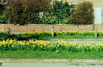 Kingston Vale - Image: Daffodils, Kingston Vale (2004)