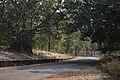 Dandadhar Road - Ramial Reservoir Area - Dhenkanal 2018-01-25 9540.JPG