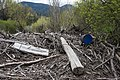 Deadwood on river bank.jpg