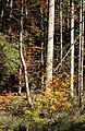 Deisenhofener Forst Lanzenhaar-15.jpg