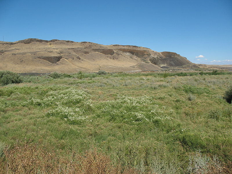 Soubor:Desert meadow in Eastern Washington.jpg