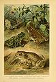 Deutschlands Amphibien und Reptilien (5981665253).jpg