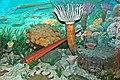 Diorama of a Devonian seafloor - corals, nautiloid, trilobites, fenestrate bryozoans, gastropods, algae (30701689677).jpg