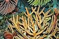 Diorama of a Devonian seafloor - crinoids, corals, algae (44743706395).jpg