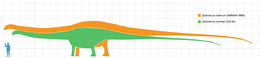 Diplodocus scale.png