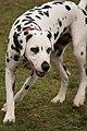 Dog park photos (14293097988).jpg
