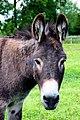 Donkey at Island Farm Donkey Sanctuary - geograph.org.uk - 1353125.jpg