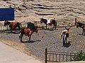 Donkeys 小毛驢 - panoramio.jpg