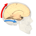 Dorsal and ventral pathways - medial view.png