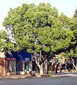 Downtown Redlands, CA 6-3-12b (7156722817).jpg