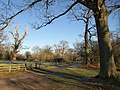 Drive in Oakly Park - geograph.org.uk - 1122169.jpg