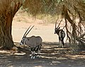 Driving through the Namib Desert (40477190681).jpg