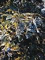 Drveće u parku Svetog Save u Nišu (9).jpg