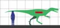 Dryptosaurus SIZE.png