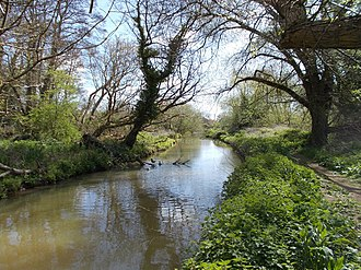 Eastern Yar - Riverside scene in early spring, near Alverstone