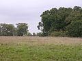 Edge of Roydon Woods and Brockenhurst Park, New Forest - geograph.org.uk - 62516.jpg