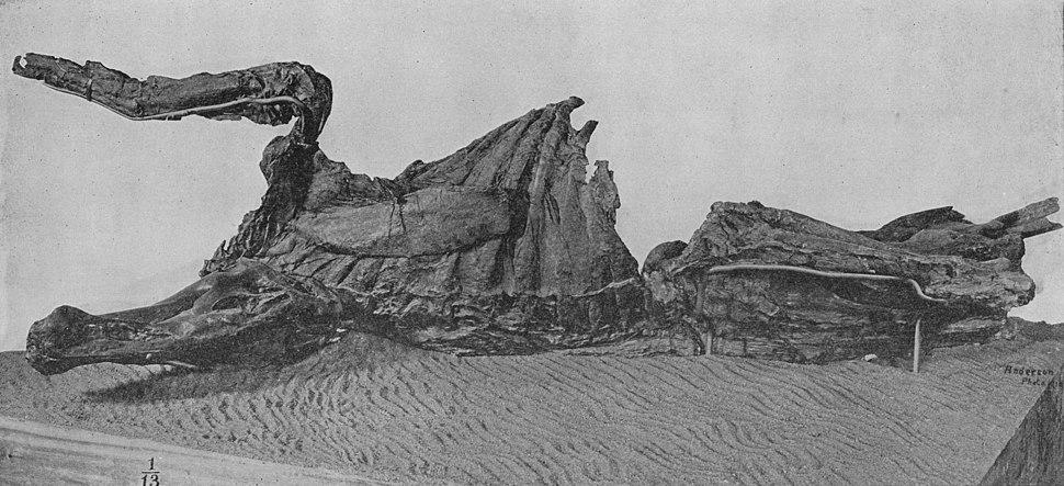 Edmontosaurusmummy
