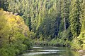 Eel Wild and Scenic River, California.jpg