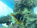 Eilat Coral World Underwater Observatory 03.jpg