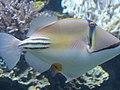 Eilat Coral World Underwater Observatory 20.jpg