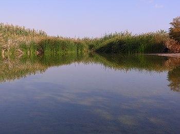 English: Einot Zukim (Ein Fashkhe) Reserve, Is...