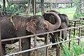 Elephant is eating in the Zoo.jpg