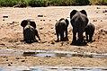 Elephants, Tarangire National Park (2) (28598142802).jpg