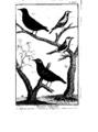 Encyclopedie volume 5-069.png