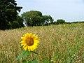 Environmental Stewardship, Green Lane, Tunstall - geograph.org.uk - 53116.jpg
