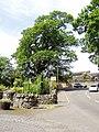 Eppie Callum's Oak - geograph.org.uk - 921532.jpg
