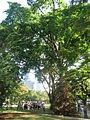 Esplanade Park 7.JPG