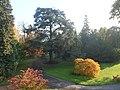 Essen, Villa Hügel, Hügelpark, Blaue Atlas Zeder.jpg