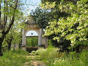 Estoi - Robinia pseudoacacia flowering in the gardens of Estoi